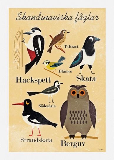 Skandinaviska fåglar